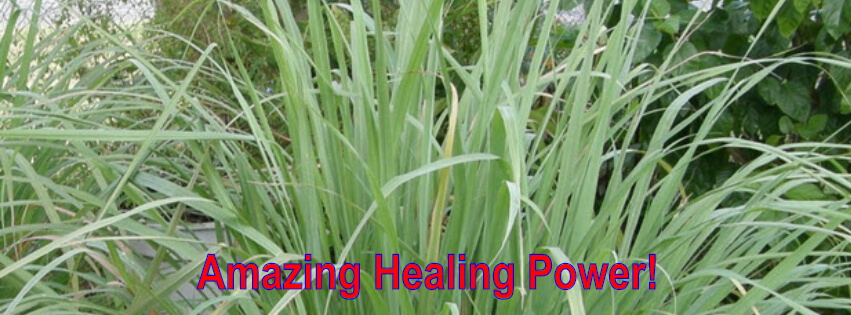 lemongrass natural healing medicinal