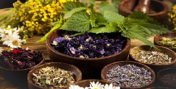 healing herbs and medicinals