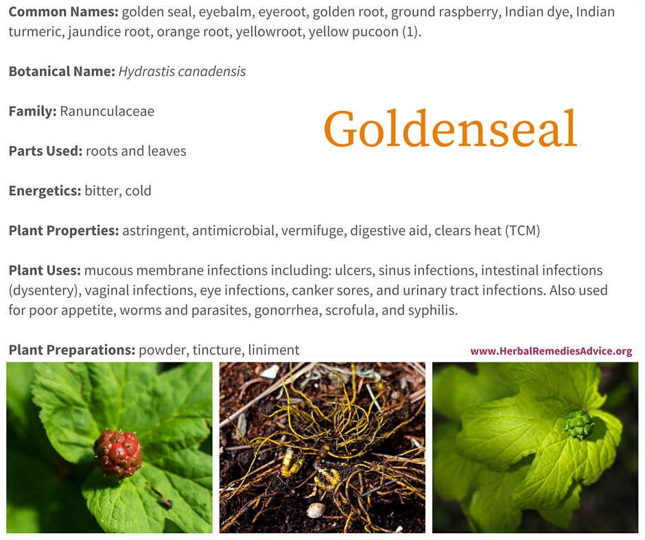 medicinal properties of goldenseal